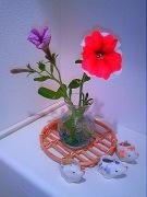 切り花を飾る